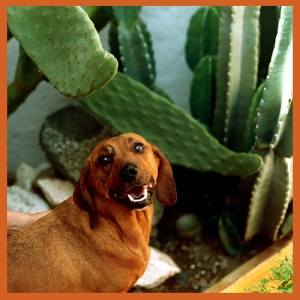 Dog and Cactus Needles
