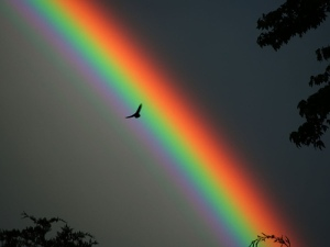 Bird and Rainbow