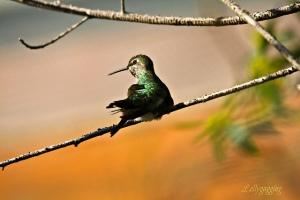 Broken Winged Bird